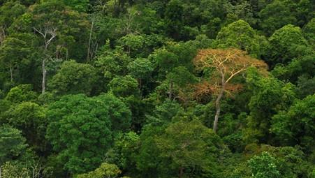 Gola Forest © RSPB
