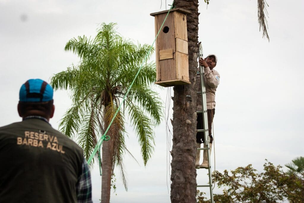 Artificial nest boxes have been key to the Blue-throated Macaw's recovery © Asociación Armonía