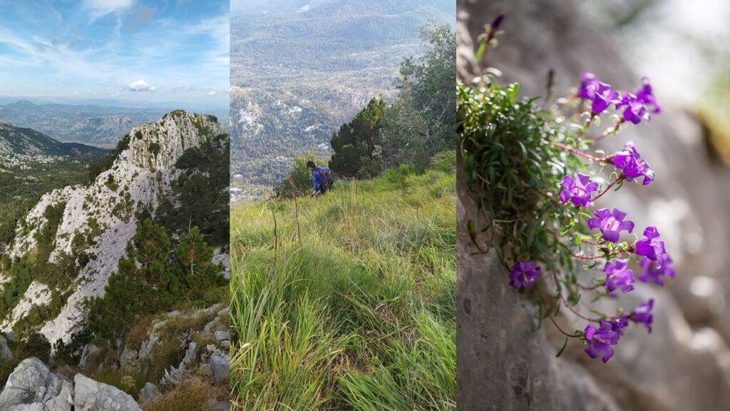 Ridge, Mount Orjen; Popovic finding irises (© Demayo); Edraianthus serpylifolius (© Jovićević)