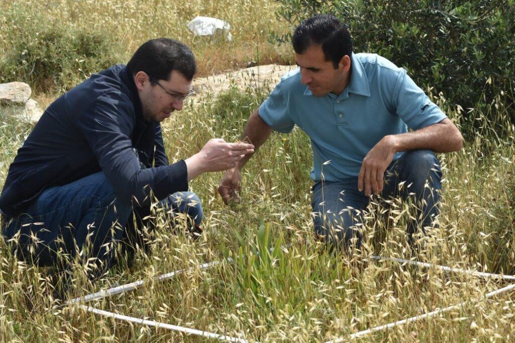 PWLS team surveying Iris haynei in Faquaa village, Palestine © PWLS