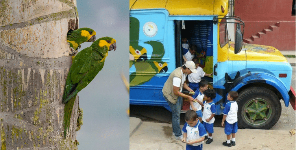 """Outreach including a """"parrot bus"""" saved Yellow-eared Parrots' palm trees © mauroossa/Shutterstock"""